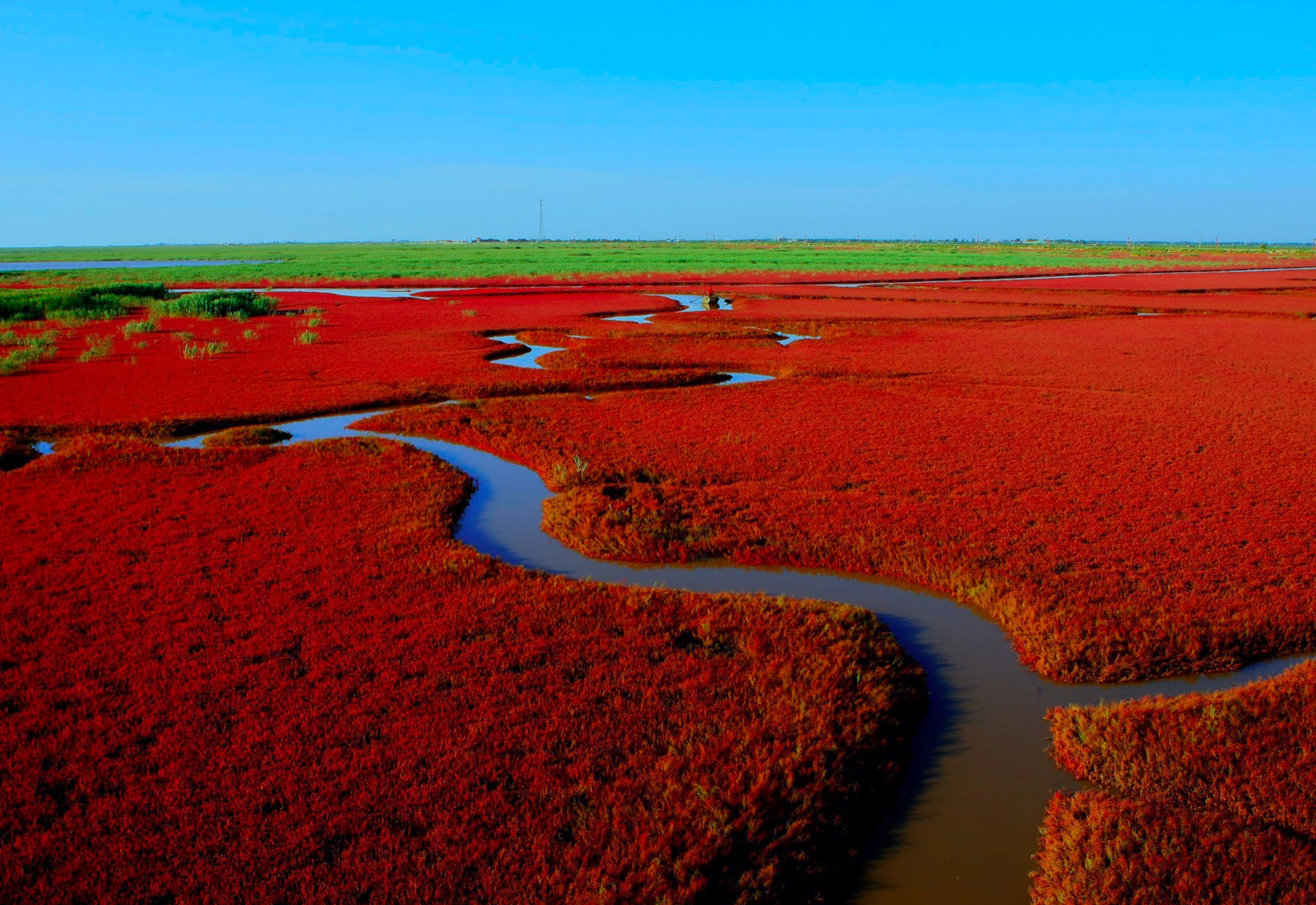 top china destination panjin red beach liaoning province 1600 x 1100